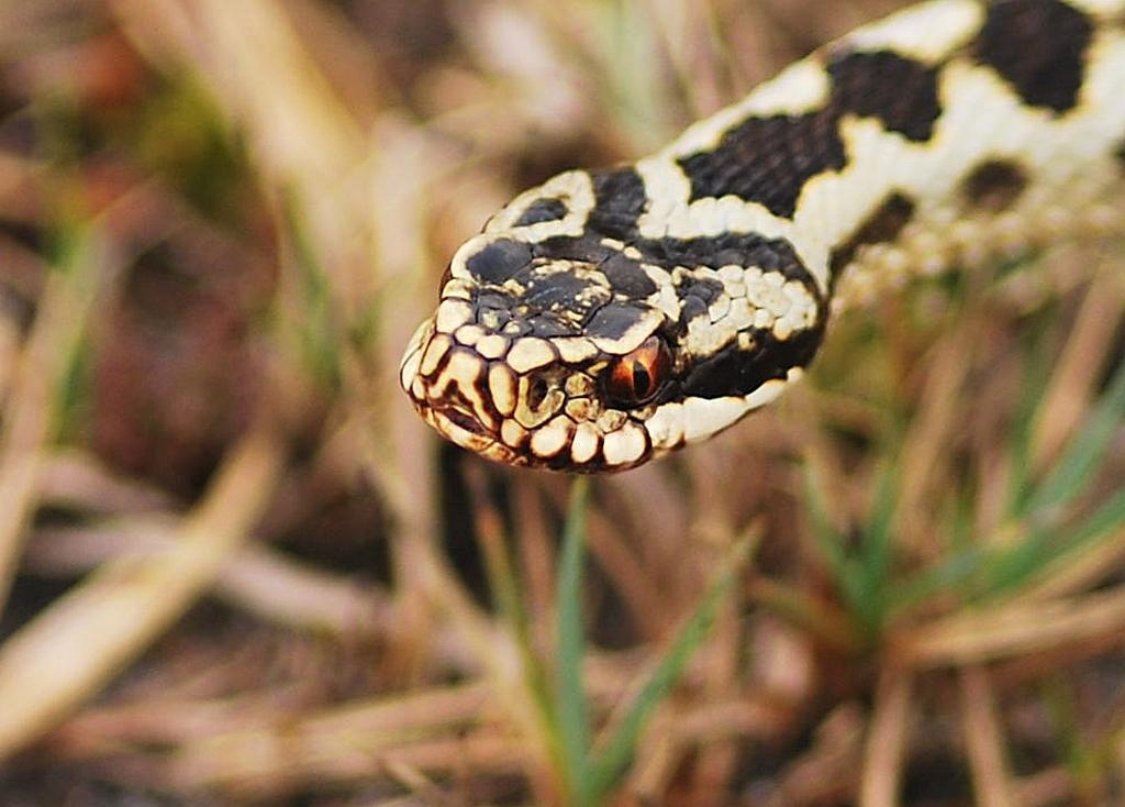 змеи пермского края с картинками день объединяет