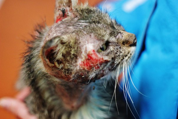 Пермские зооактивисты открыли монумент бездомному коту