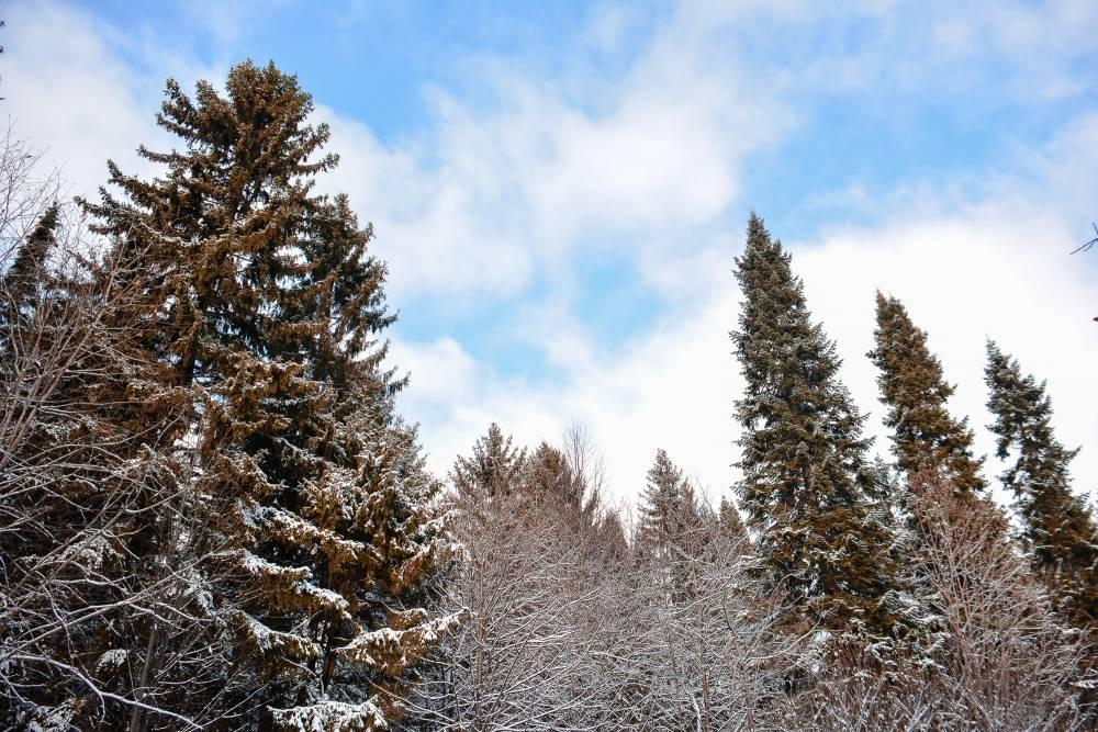 Синоптики: балканский циклон «Лотти» затронет только север Пермского края