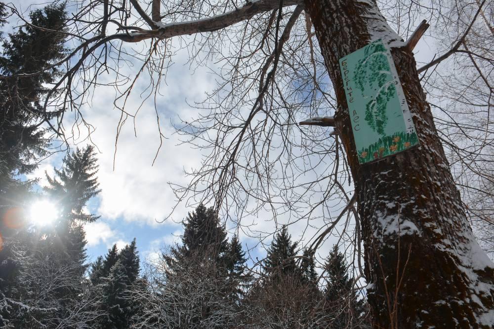 Синоптики обещали вСаратовской области морось имокрый снег