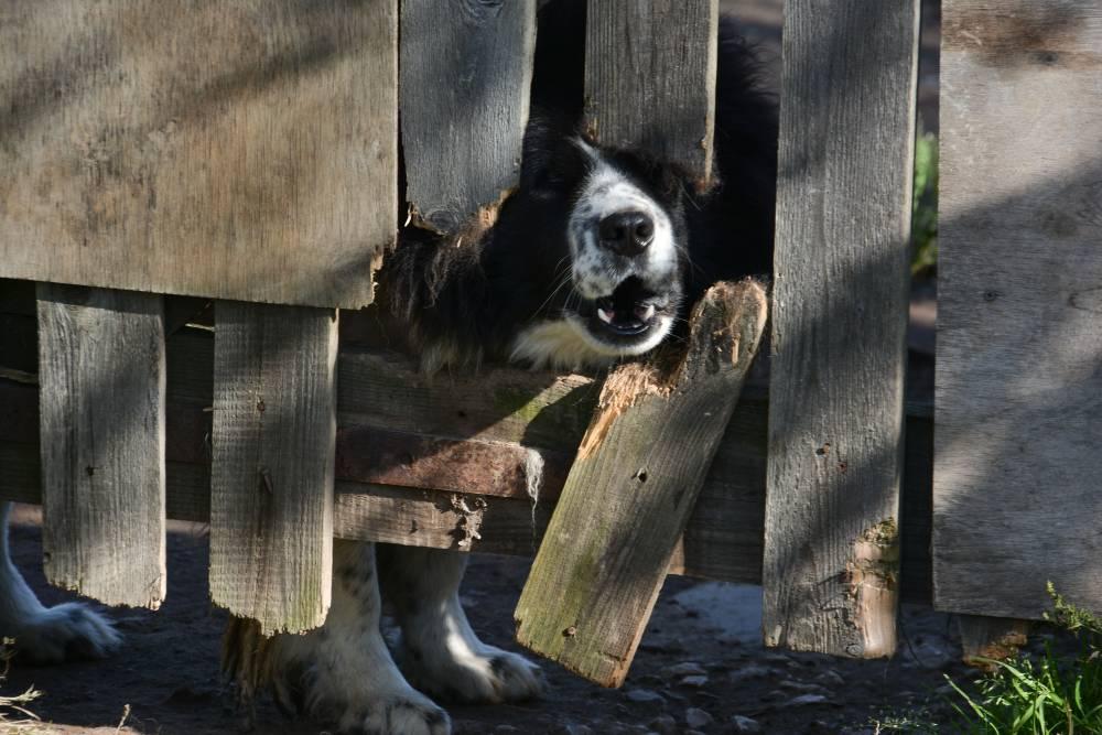 В Перми собака набросилась на ребенка и прокусила ему ногу