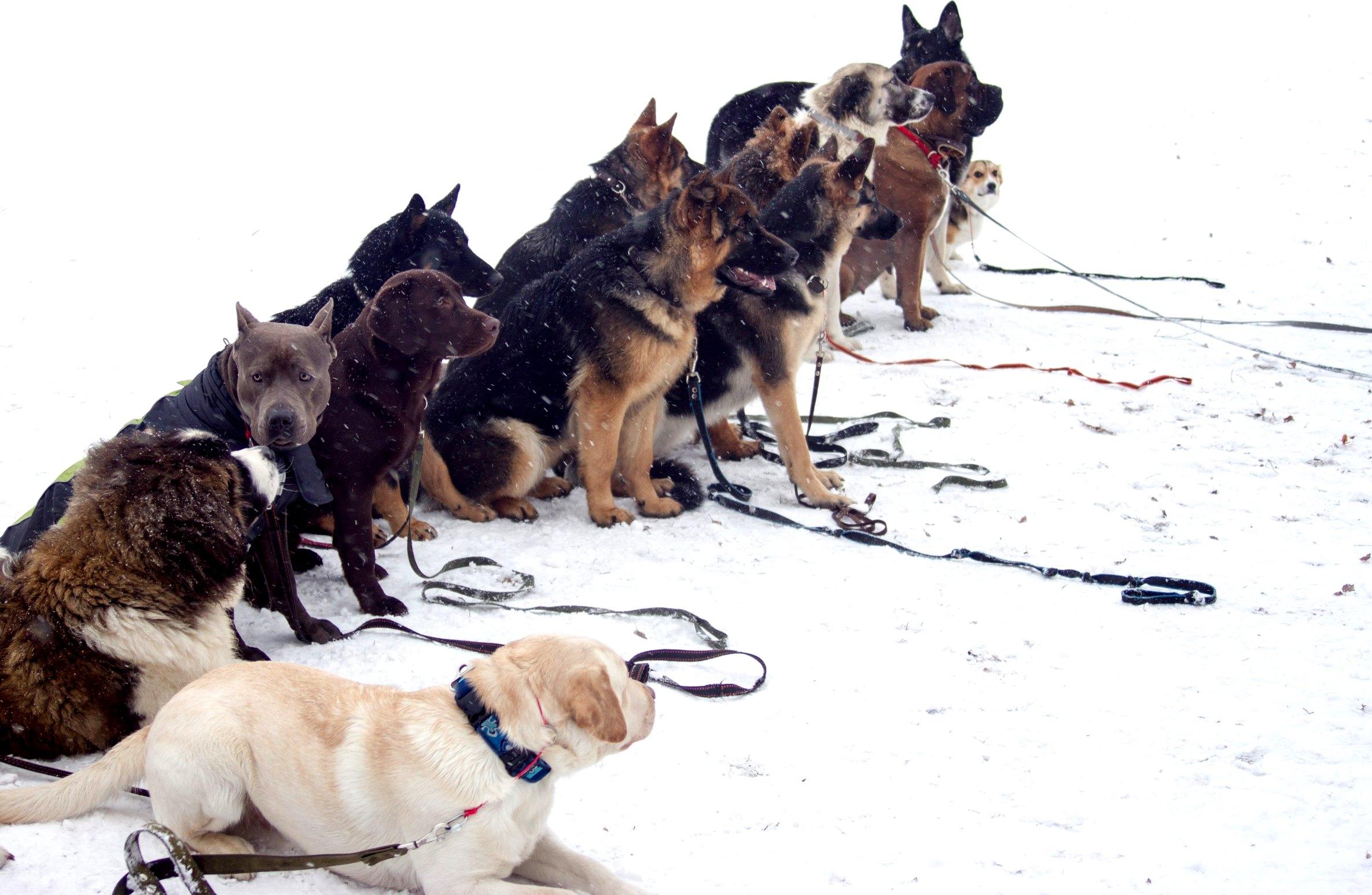 Как переводить собаку на сухой корм