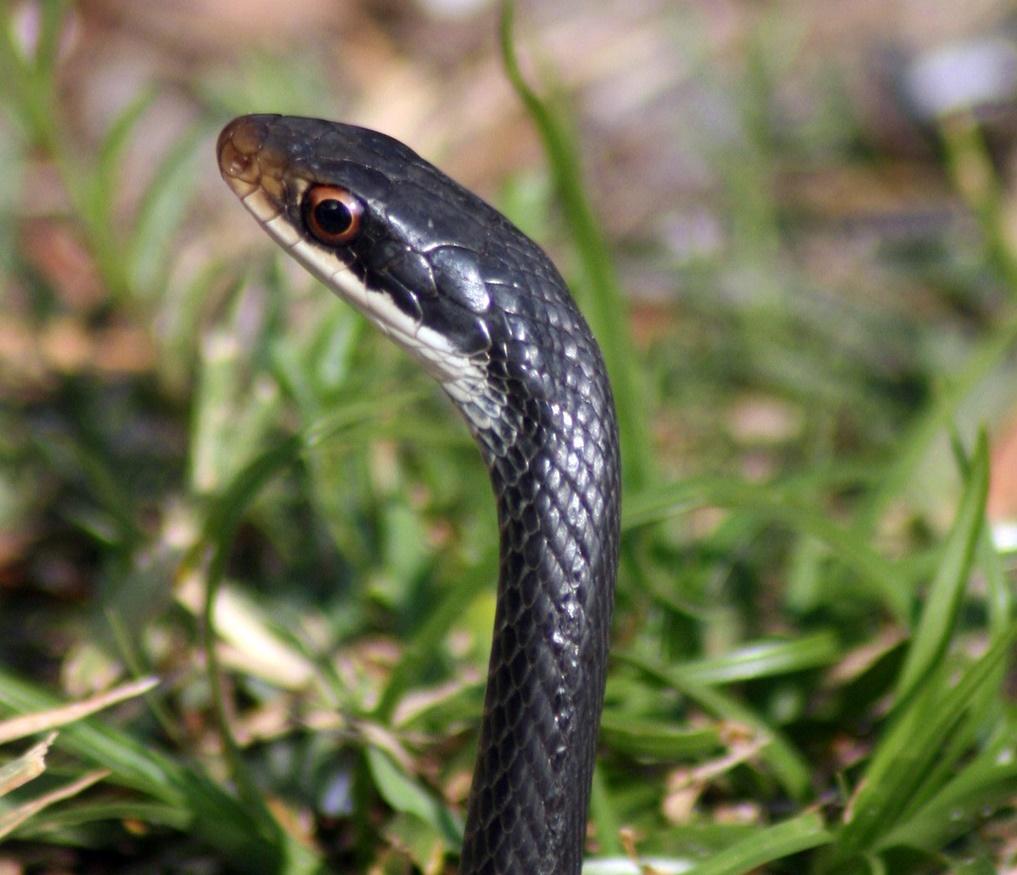 информации змеи пермского края с картинками настоящая