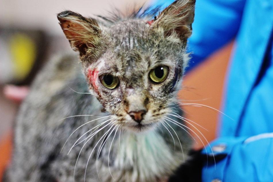 картинки избитых кошек люпин стоит
